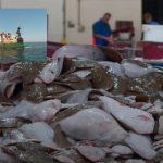 Noordzeevis van zee tot op het bord [documentaire]